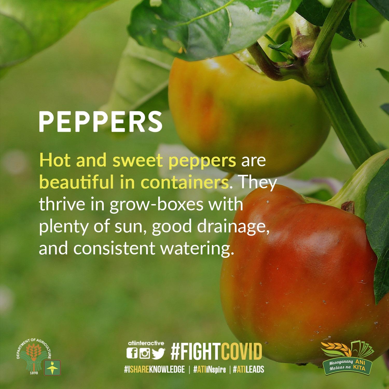 Peppers technotips