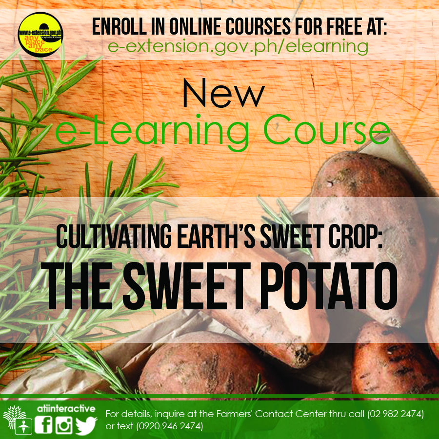 Cultivating Earth's Sweet Crop: The Sweet Potato