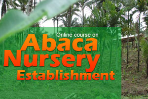 Abaca Nursery Establishment