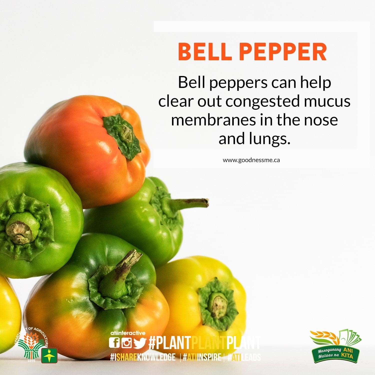 bell pepper technotips