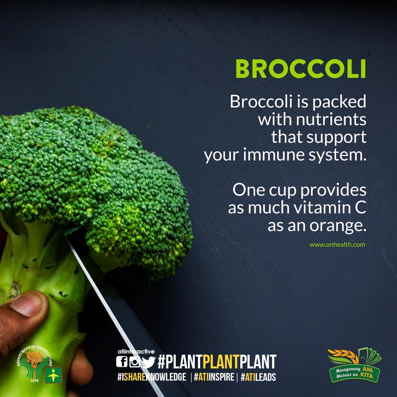 broccoli technotips number 2