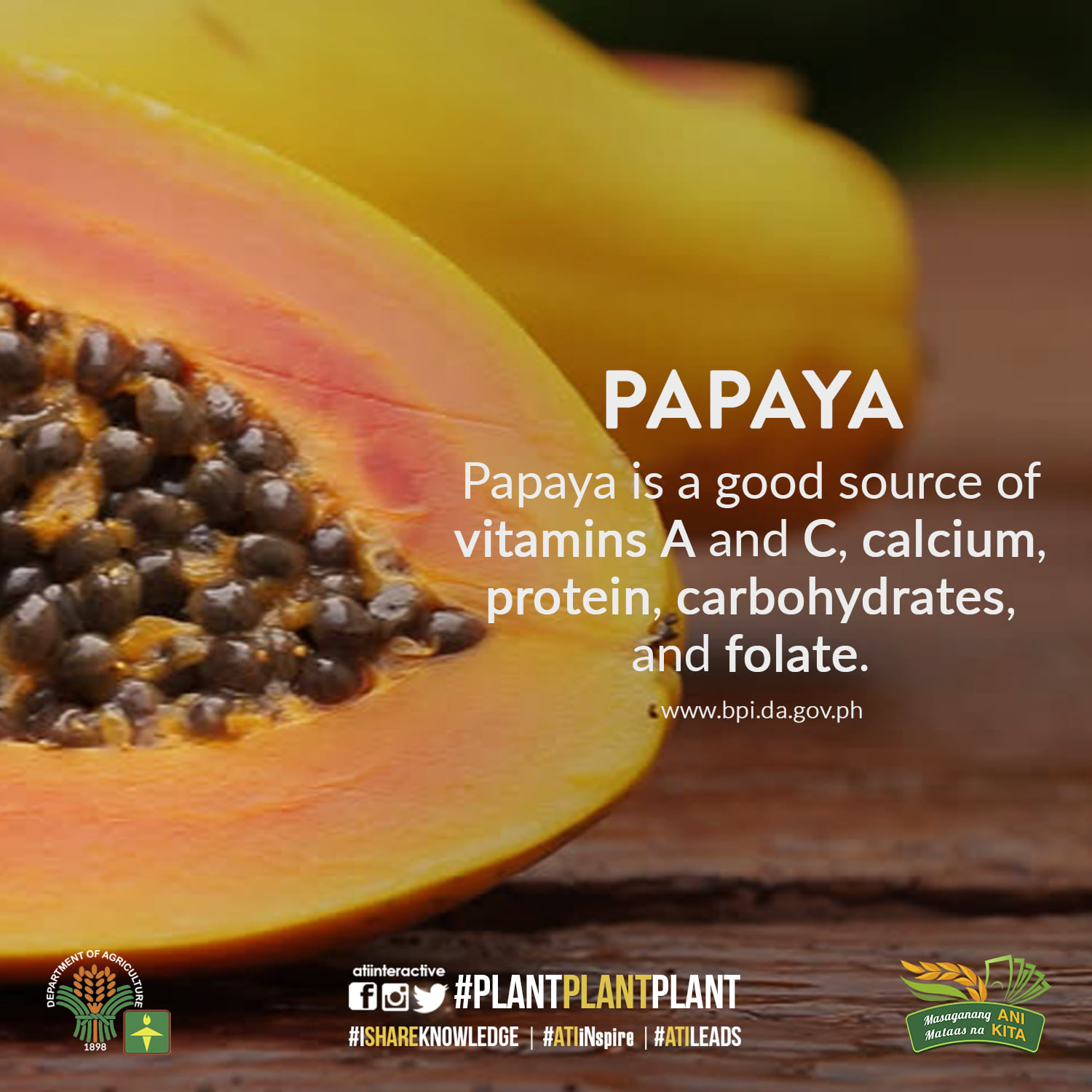 papaya october technotip