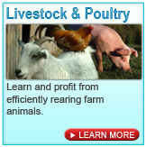 livestock and fisheries