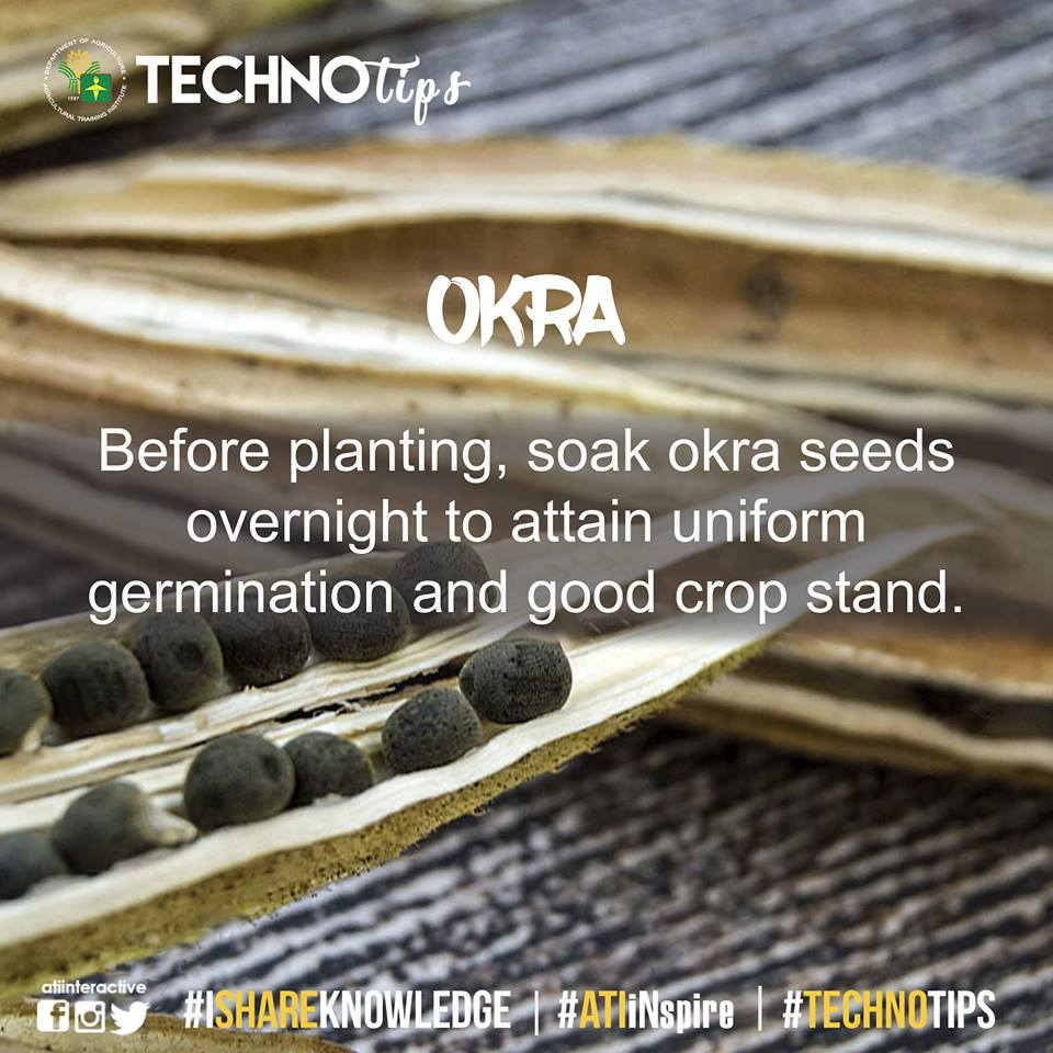 Technotip: Okra